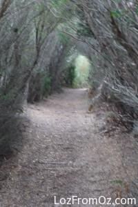 Fairy glades
