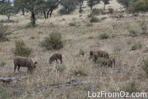 Pumba family